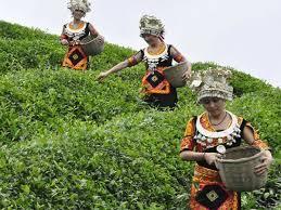 Хит-парад мифов о китайском чае