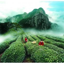 Особые Свойства и виды зеленого китайского чая